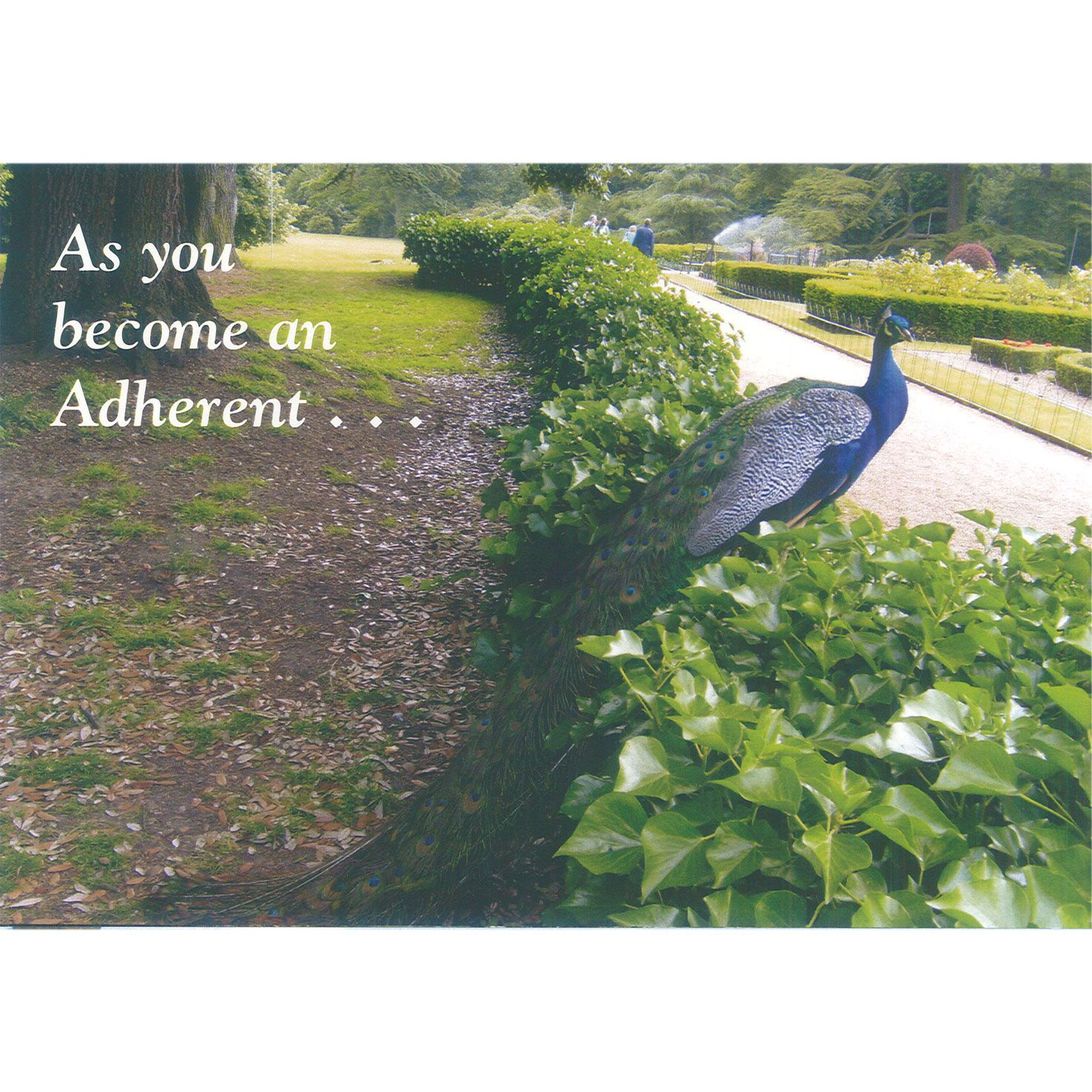 Adherent Card - Peacock